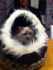 Mira i sitt nya kattungebo